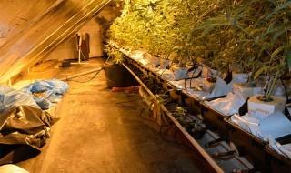 Hanfplantage Borken