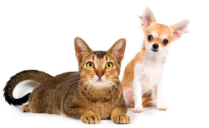 Amivedi Huisdieren gezocht of gevonden