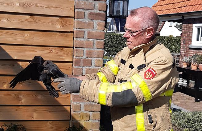 Brandweer Dinxperlo Kauw gered